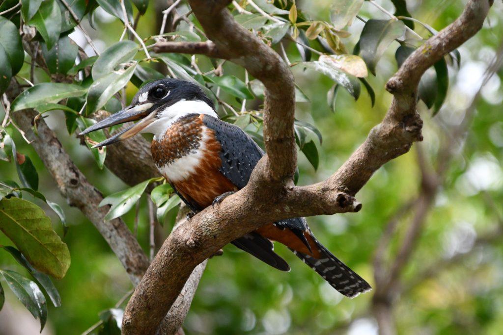 https://nature-insolite.blog/wp-content/uploads/2019/01/Pantanal-Bresil-Sept-2018-C.Di-Nota-219-1024x683.jpg